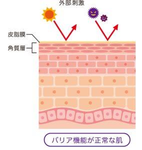 肌のバリア機能 皮膚構造